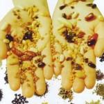 Seed. Семянотерапия: эффективное лечение семенами