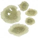 Lichen is a person. Лишай у человека, лечение лишая народными средствами